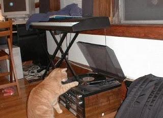Antes fossem os meus audiófilos... - Página 2 Funny-cats-playing-records