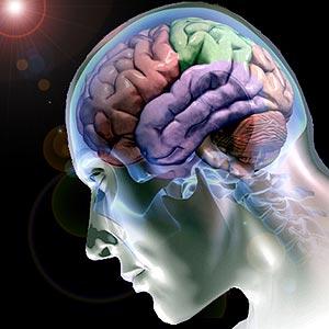 Cérebro humano está a ficar menos inteligente Cerebro02
