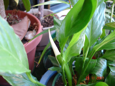 வண்ண வண்ண பூக்கள் DSC09051