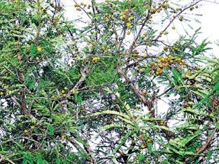 ஆடி மாதம் சதுரகிரி செல்வோம் -சூட்சமம்-2 Nelli