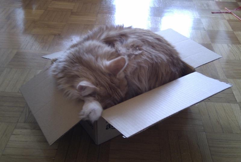 Gattilicious  =^.^= Big-cat-small-box