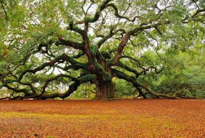 أجمل وأغرب الأشجار إطلاقا Amazing-trees-26