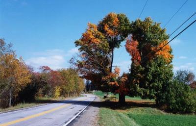 أجمل وأغرب الأشجار إطلاقا Amazing-trees-28