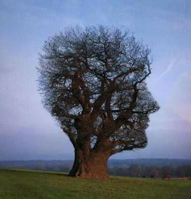 أجمل وأغرب الأشجار إطلاقا Amazing-trees-21