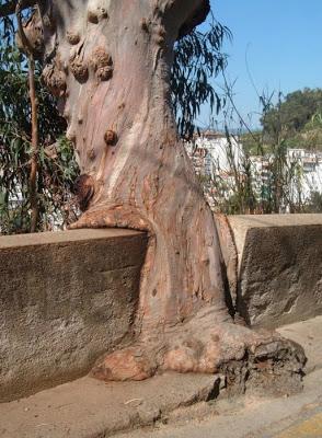 أجمل وأغرب الأشجار إطلاقا Amazing-trees-01