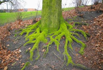 أجمل وأغرب الأشجار إطلاقا Amazing-trees-20