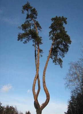 أجمل وأغرب الأشجار إطلاقا Amazing-trees-19