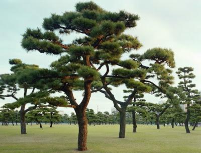 أجمل وأغرب الأشجار إطلاقا Amazing-trees-18