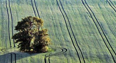أجمل وأغرب الأشجار إطلاقا Amazing-trees-12