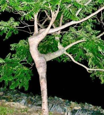 أجمل وأغرب الأشجار إطلاقا Amazing-trees-13