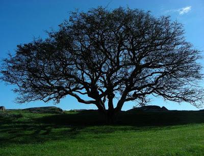 أجمل وأغرب الأشجار إطلاقا Amazing-trees-11