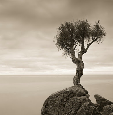 أجمل وأغرب الأشجار إطلاقا Amazing-trees-10