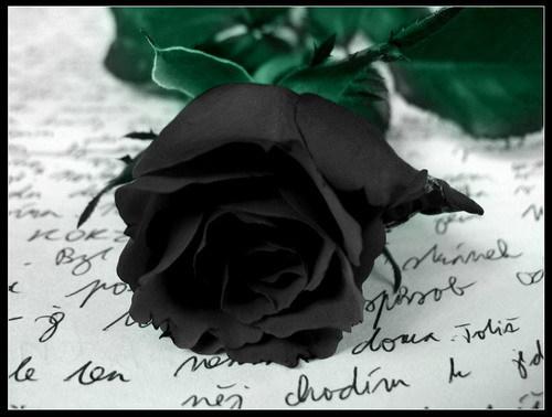 Uporedite vaše voljeno biće sa cvijetom 27120955429414