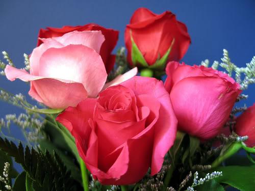 நுழைவாயில்.! Flowers