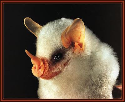 حقيقة مخلوقات أول مرة أشوفها Bat%2B2