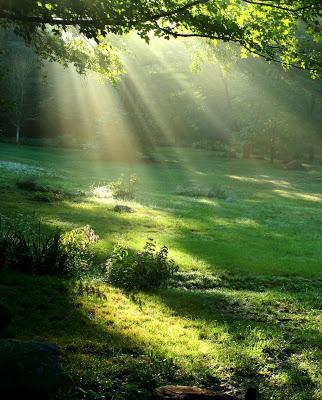 Seul au monde. Wise Spirit - Page 4 Fotolia_1917615nature-soleil-vert