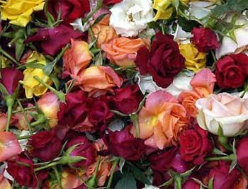 கண்னைக் கவரும் மலர்கள். Flowers_350