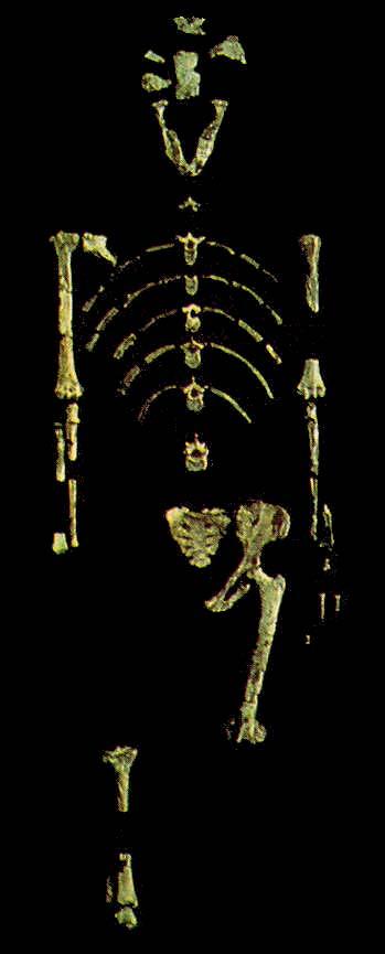 Tres personajes de la Prehistoria Lucy