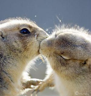 SABATO 15 SETTEMBRE Coniglietti-bacio