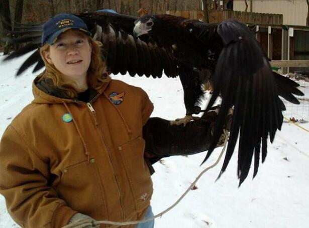 Comparação do tamanho de águias  com relação ao homem. Duncan3