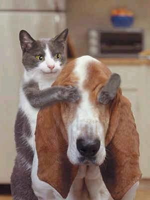Bienvenidos al nuevo foro de apoyo a Noe #281 / 20.08.15 ~ 24.08.15 - Página 2 Animales-graciosos-risa-gato-sorpresa-perro