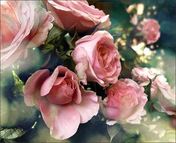 Bon Lundi Roses