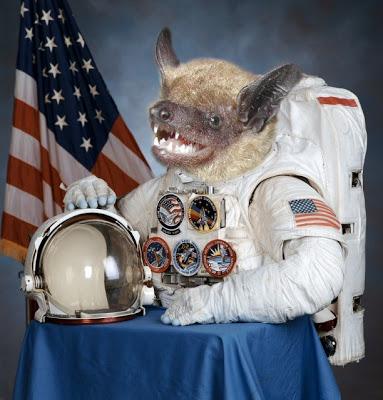 Shuttle - Il pipistrello che decollò con lo Shuttle Spacebat_astronaut