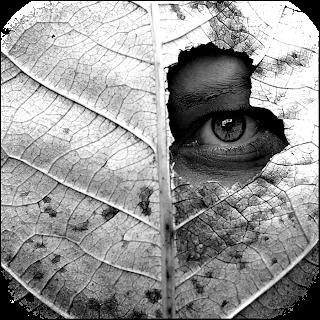 OJOS, MIRADAS E%26E-ojo_soleil_220507