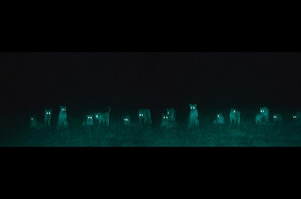 African savannah at night (Martin Dohrn) Africa_night_09