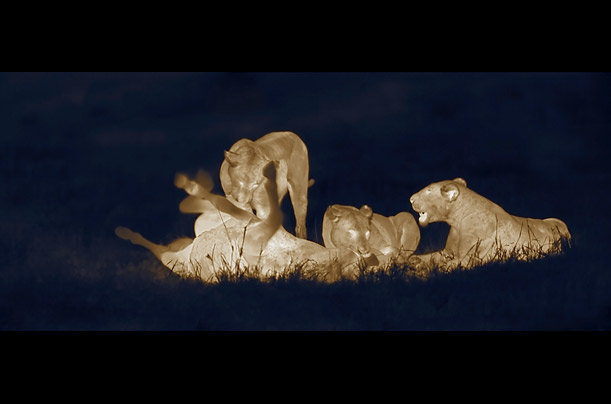 African savannah at night (Martin Dohrn) Africa_night_03