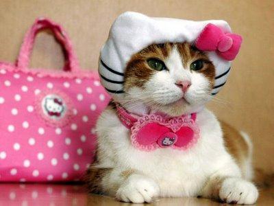 Una Obsesión Inconveniente, Natasha Tate (rom) Disfraz-gato-hello-kitty