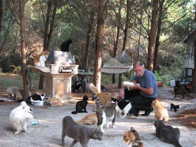 Un pueblo para 500 gatos Ac-7