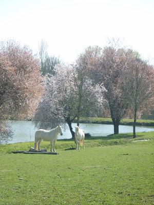 Qui a dit que ça sentais le printemps ?? S8301514