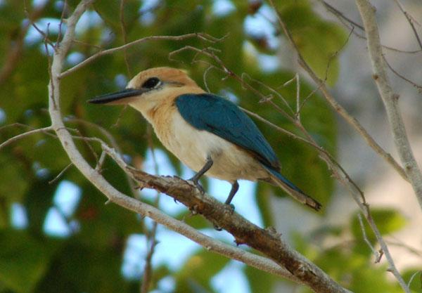 oiseau Martin 6 avril trouvé par Martine 3