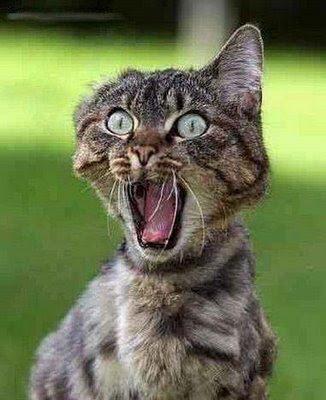 Mulher está processando Google por traçar rota a pé que a fez ser atropelada Gato-assustado