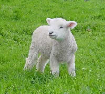 Postavi sliku i zatraži sledeću Lamb