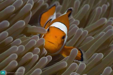 வண்ணமயமான டாப் 10 – உயிர்கள் 7-lifeis-clownfish