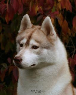 Westminster Dog Show Merlotheadshot