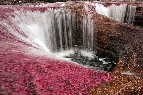 THE MOST COLORFUL RIVER IN THE WORLD Tumblr_kyeg43yXba1qzzrfqo1_500