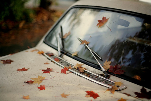 Empieza el otoño. - Página 2 Tumblr_laufzuGcuC1qb23pyo1_500
