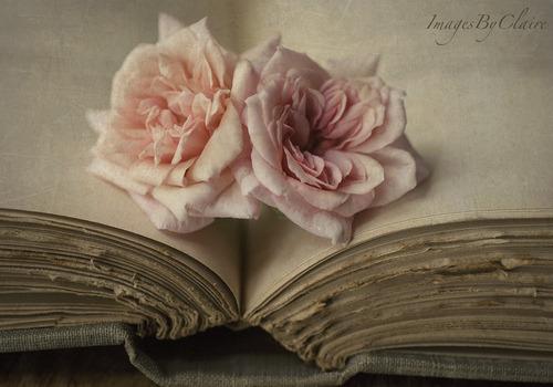 Book  - Page 2 Tumblr_lq09ewIkE71qif1wro1_500
