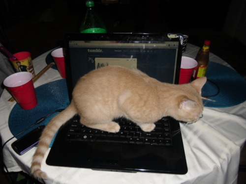 Laptop`uri - Page 4 Tumblr_m34gou5O5P1rusd4yo1_500