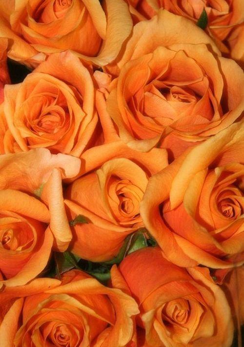 volim narančasto - Page 10 Tumblr_n2pxu8qaDs1qg205no1_500