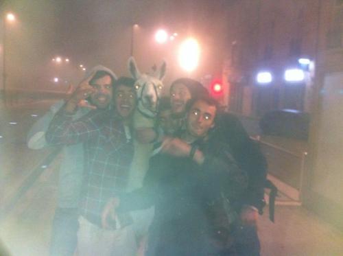 Detenidos 5 jóvenes franceses por robar una llama y llevársela de fiesta Tumblr_mvpr5i6Jc31qeacv5o1_500
