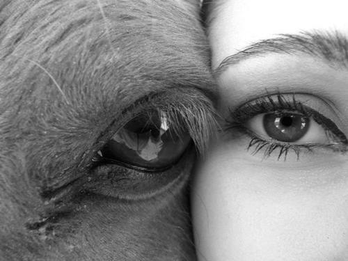 """""""Ojos verdes son traidores, azules son mentireiros...  marrones y acastañados son firmes y verdadeiros..."""" Tumblr_mqvryofDSt1sreen9o1_500"""