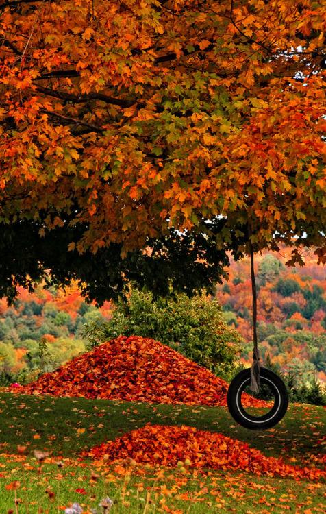Empieza el otoño. - Página 2 Tumblr_mv44bneYdn1s3ggdno1_500