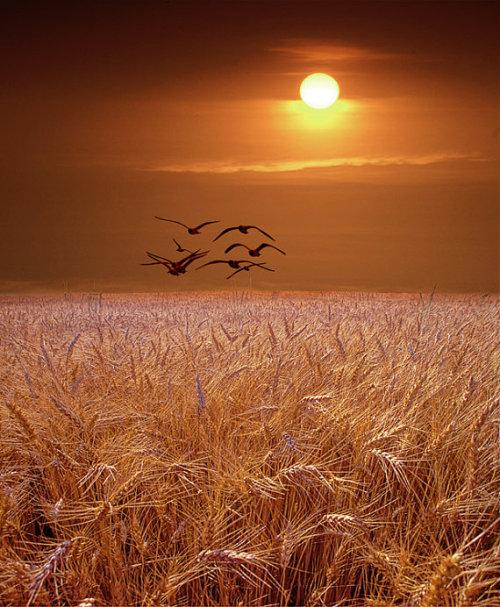 Zalazak sunca  Tumblr_m5h2ekUbrL1qb30dwo1_500