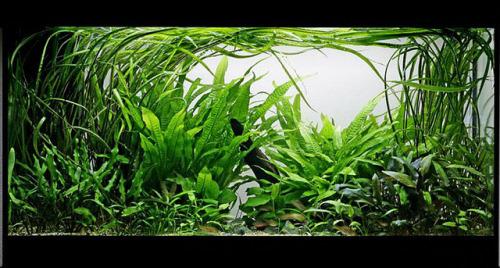 presentation de mon aquarium 160 litres amazonien Tumblr_miy1ufOYFs1s6irydo1_500
