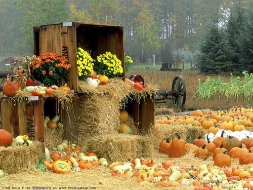 Empieza el otoño. - Página 2 Tumblr_muv92ceR061sreen9o1_500