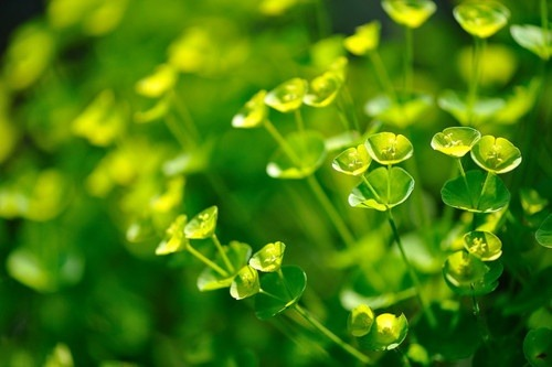 Volim zeleno - Page 32 Tumblr_n870h8IA8p1sg22dvo1_500